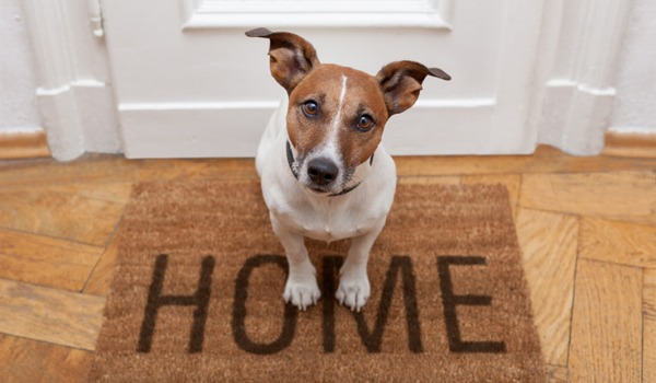 Pet Proofing - Preparing the Home for Your First Pet